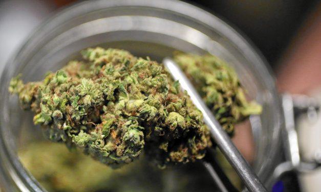Marijuana: An Entrepreneurial High